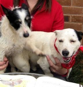 dogs -jack & nolene 20