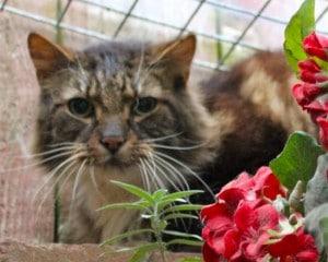 cats - leo 2