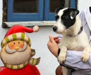 dogs - pepperpot 2