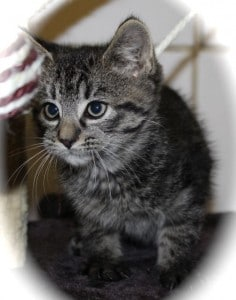 kittens - marvel 2