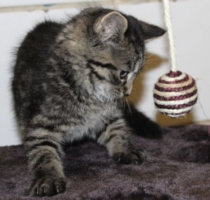 kittens - marvel 3