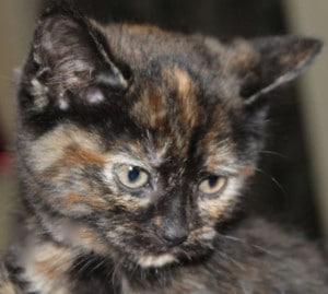kittens - mimi 3