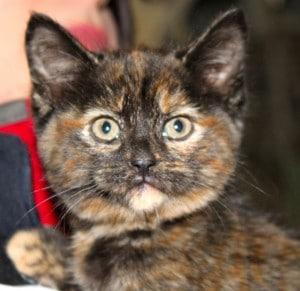 kittens - mimi 6