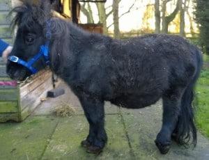 pony - rufus