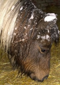 pony - snow bibby