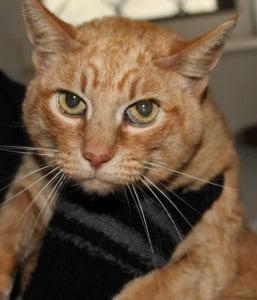 cats - ginger tina 5
