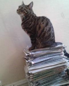 cats - lost cat leo
