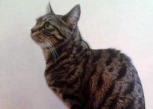 cats - lost cat leo 3
