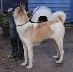 dogs - huskita 8