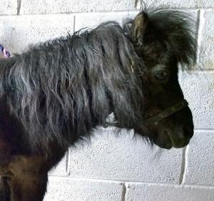 ponies - rufus 15