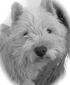Perro - black & white 2