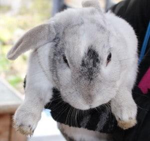 bunny - bobo 3