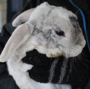 bunny - bobo