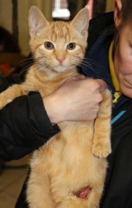 cats - jasper 2