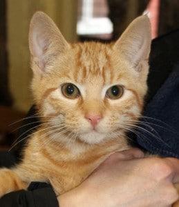cats - jasper 3