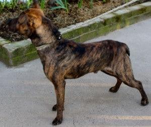 dogs - jimbo 5