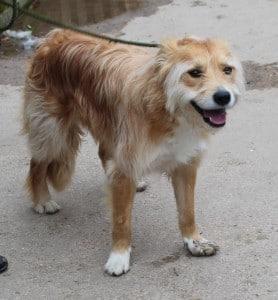 dogs - tramp 5
