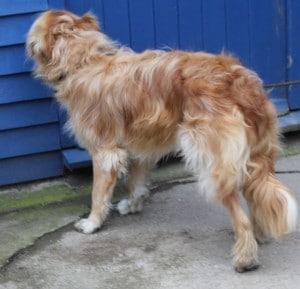 dogs - tramp 7