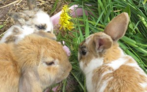 bunnies - two litters 3