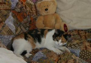 cats - tortie 3