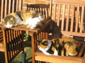 cats - tortie & mischa
