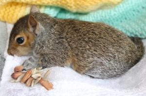 squirrel - postie