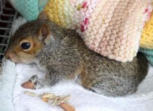 squirrel - postie 5