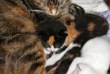 cats - demelza 5