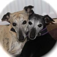dogs - heidi & zeta 10