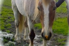 horses - rhogan