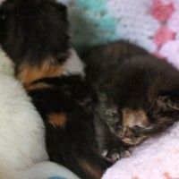 kittens - lost