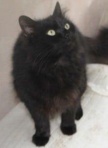 cats - pusscat 19