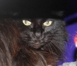 cats - spanish 3