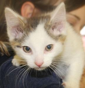 kittens - ashley 2