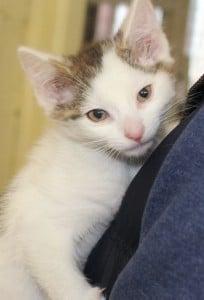 kittens - ashley