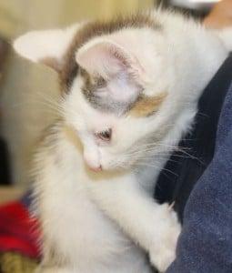kittens - ashley 3