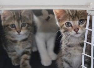 kittens - farm kits