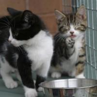 kittens - Felix & Pippa 7