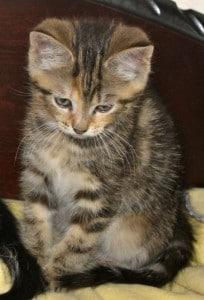 kittens - tiffany 5
