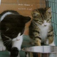 kittens - wish list