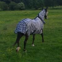 ponies - bubbles zebra