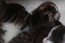 kittens - 5 of them