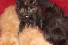 kittens - strays
