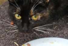 cats - cinders 22