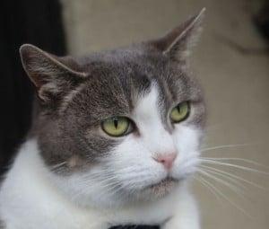 cats - frostie breakf 3