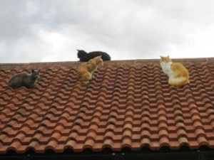cats - on roof 2