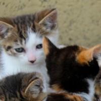 kittens - fives