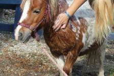 ponies - daydream bath