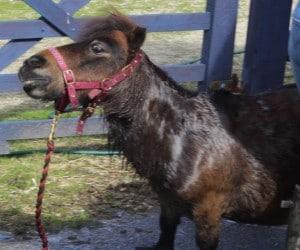 ponies - pixie bath 2