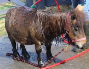 ponies - pixie bath